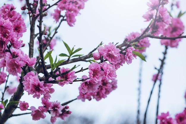 Fleurs roses valentine. Photo Premium
