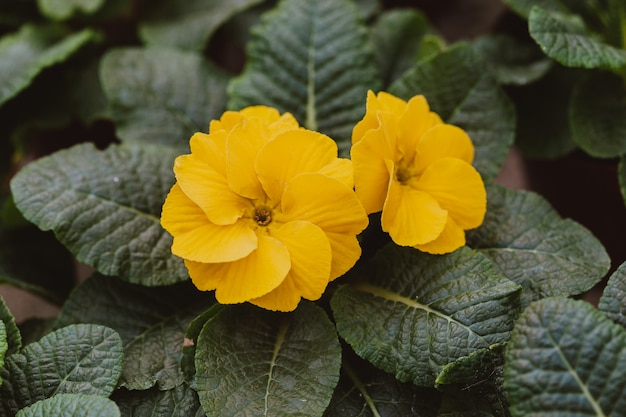 Fleurs en serre Photo Premium