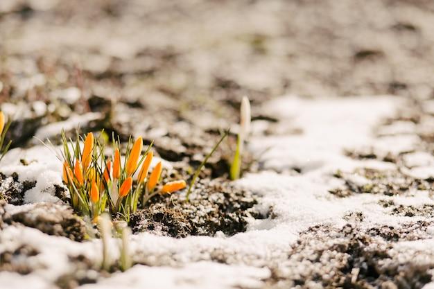 Les fleurs sont coupées de la neige Photo Premium