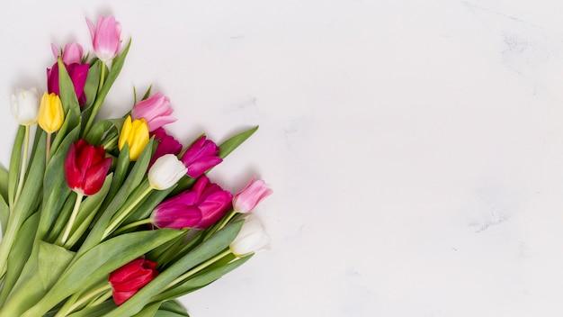 Fleurs de tulipes colorées disposées sur un coin de fond en béton Photo gratuit