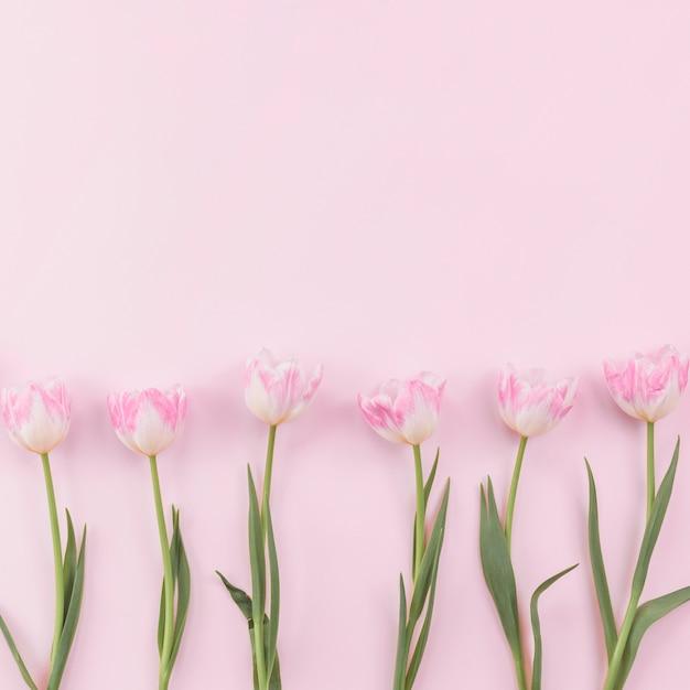 Fleurs de tulipes dispersées sur une table rose Photo gratuit
