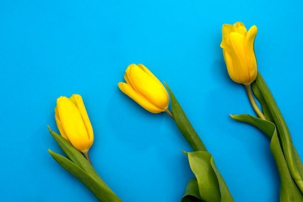 Fleurs De Tulipes Jaunes Sur Fond Bleu. En Attendant Le Printemps. Carte De Joyeuses Pâques. Mise à Plat, Vue De Dessus. Copiez L'espace Pour Le Texte Photo Premium