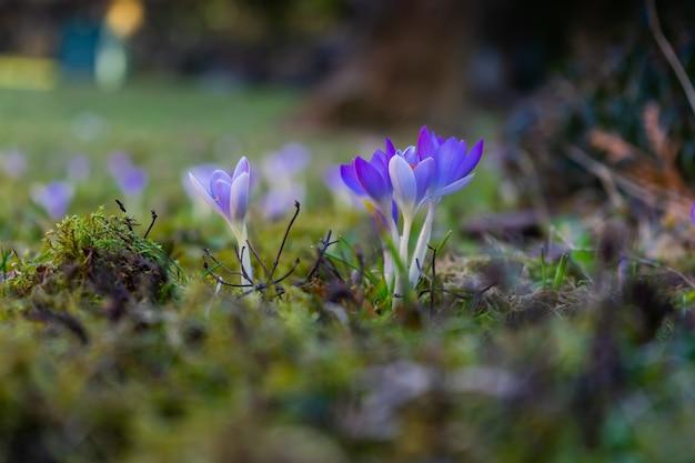 Fleurs Violettes Exotiques Sur Un Champ Couvert De Mousse Photo gratuit