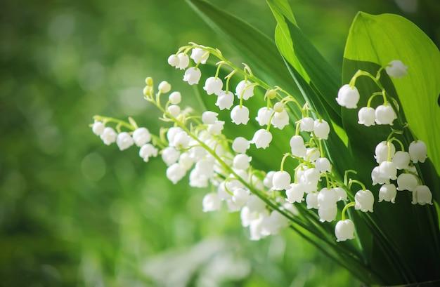 Floraison de lis dans le bouquet. mise au point sélective. Photo Premium