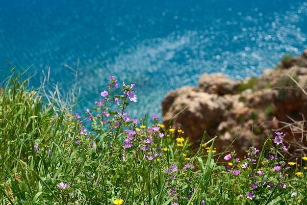 Floraison de plantes jaunes dans la nature Photo Premium