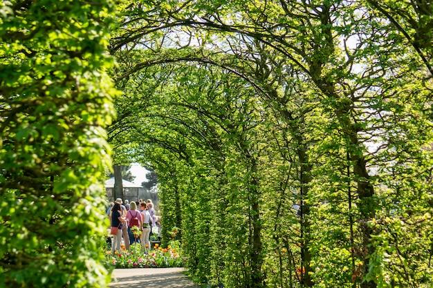 Floraison de tulipes dans le jardin de fleurs de keukenhof Photo Premium