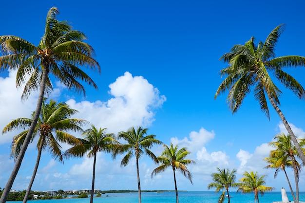 Florida keys palmiers en journée ensoleillée florida us Photo Premium