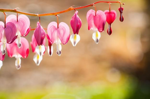 Flou artistique de fleur de cœur saignant en forme de coeur Photo Premium