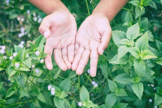 Flou artistique et flou gros plan la main de l'enfant avec une fleur nature Photo Premium