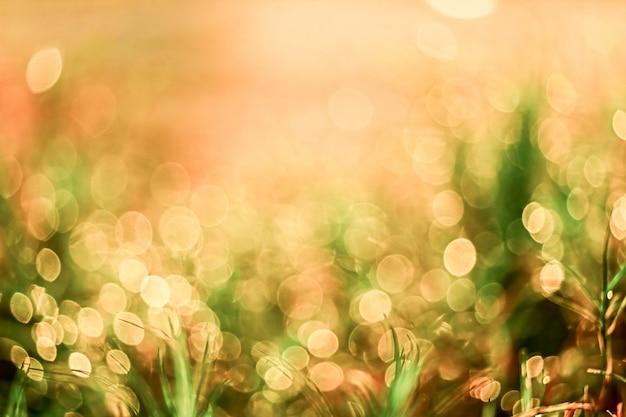 Flou de gouttes de rosée d'herbe tombent sur les feuilles vertes et la lumière du soleil au lever du soleil Photo Premium
