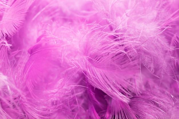 Flou, oiseaux, plume, texture, plume, pour, fond Photo Premium
