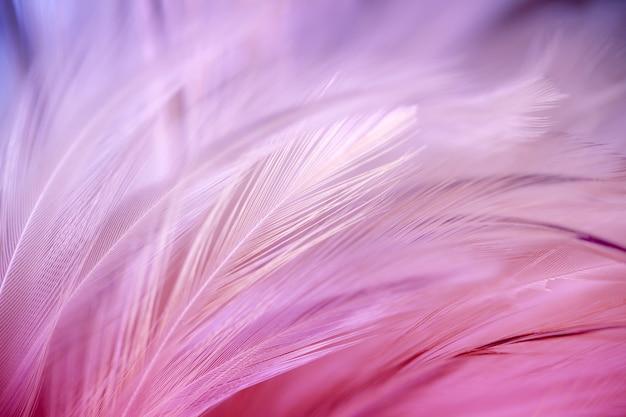 Flou de style et de couleur douce de la texture de plume de poulet pour le fond, l'art abstrait Photo Premium