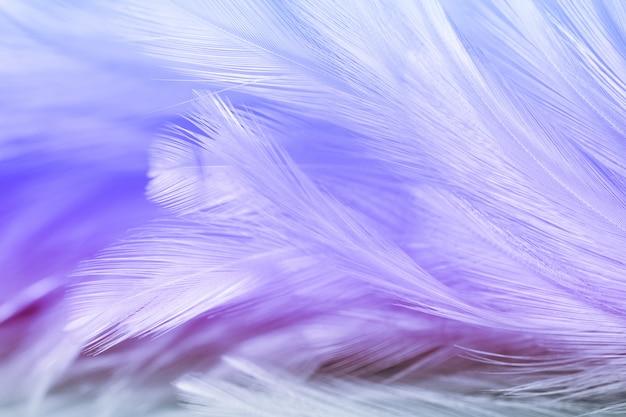 Flou des styles et couleur douce de la texture de plume de poulet pour le fond, abstrait coloré Photo Premium