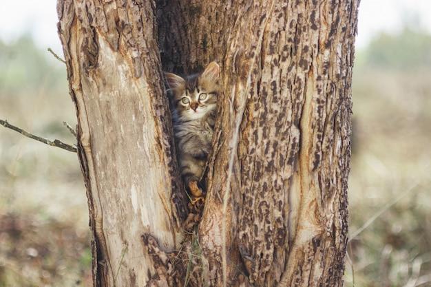 Fluffy chaton seul dans le creux d'un arbre en été Photo Premium