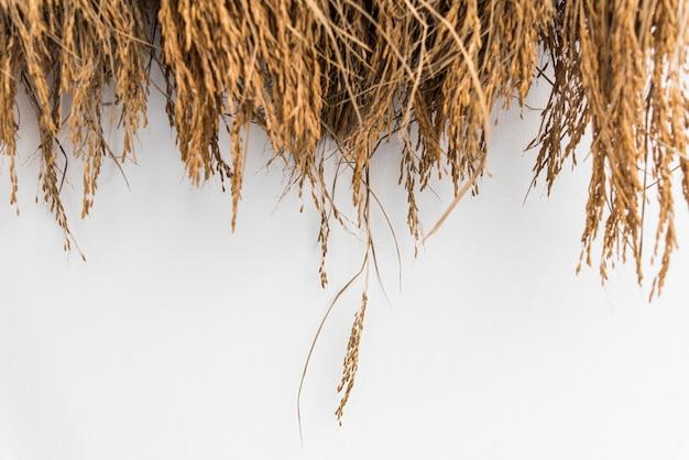 Foin séché ou paille avec grains Photo gratuit