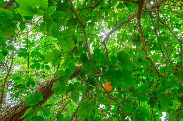 Fond d'arbre vert. Photo Premium