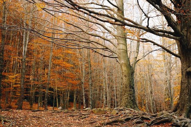 foto de Fond D'automne D'une Forêt Colorée Avec Des Feuilles D'orange ...