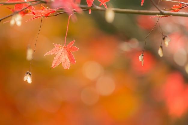 Fond d'automne Photo Premium