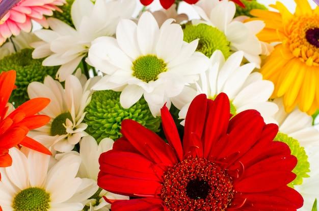 Fond de belles fleurs aux couleurs vives se bouchent. Photo Premium