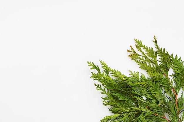 Fond blanc clair avec des branches de thuya. place pour le texte. lay plat, vue de dessus. Photo Premium