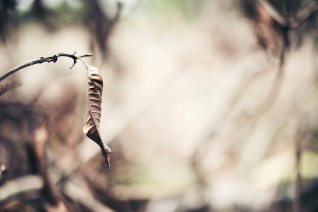 Fond de branche de feuille sèche Photo gratuit