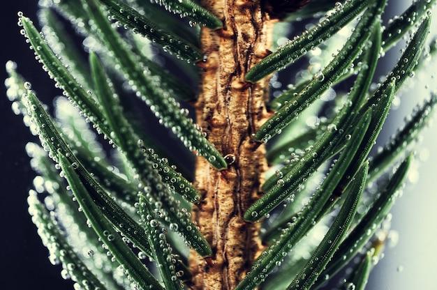 Fond De Branches D'épinette Photo Premium