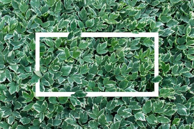 Fond de cadre blanc avec un feuillage de plantes luxuriantes Photo Premium