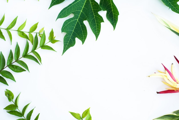 Fond de cadre de feuille verte en vue de dessus Photo Premium