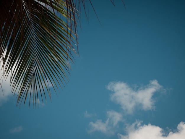 Fond de ciel d'été Photo Premium