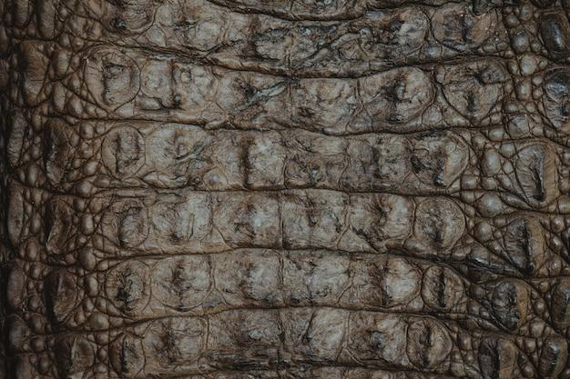 Fond closeup texture cuir crocodile Photo Premium