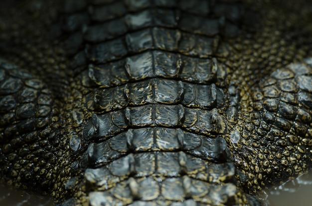 Fond en cuir de crocodile de gros plan de crocodile de siam Photo Premium