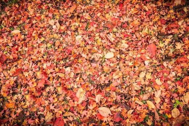 Fond fait de feuilles d'automne tombées Photo Premium