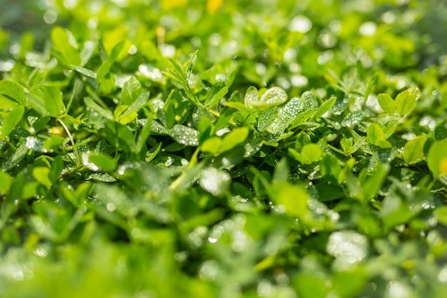 Fond de feuille verte. Photo gratuit