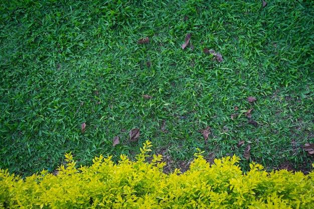 Fond de feuille verte Photo Premium
