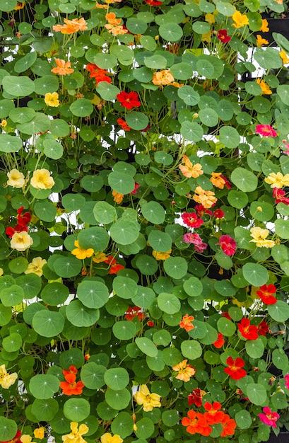 Fond de feuilles et de fleurs vertes Photo Premium