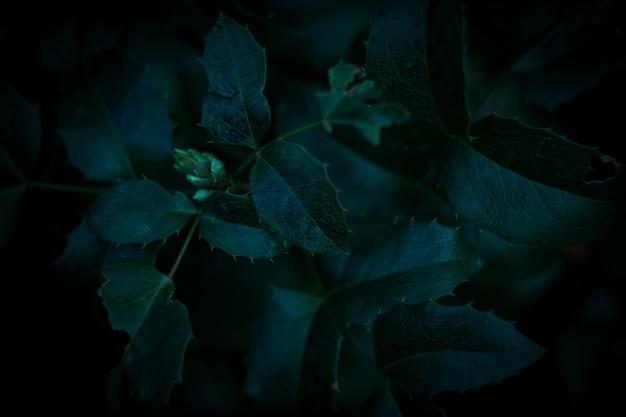 Fond de feuilles vert foncé Photo Premium
