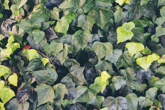 Fond avec des feuilles vertes dans la nature. Photo gratuit