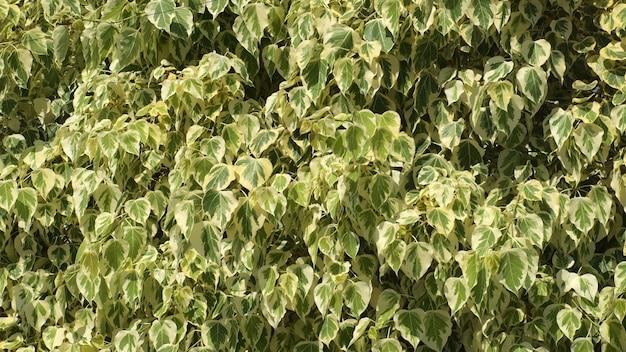 Fond de feuilles vertes Photo Premium