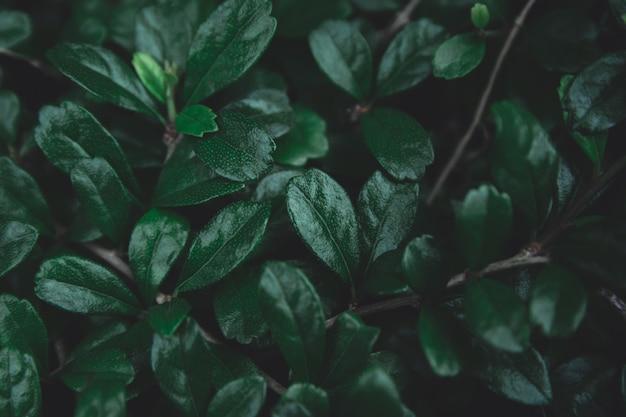 Fond de feuilles vertes. Photo Premium