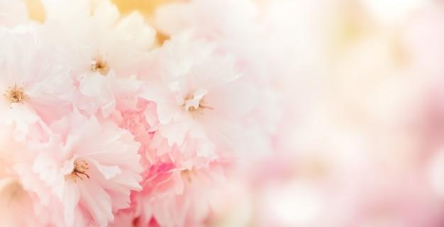 Fond de fleur rose pastel tendres