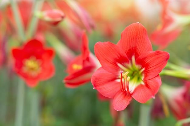 Fond de fleur rouge. Photo gratuit