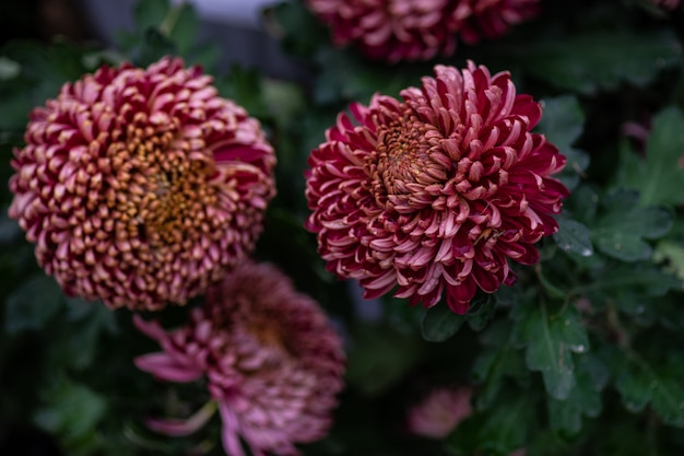 Fond de fleurs automnales Photo Premium