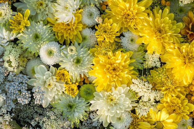 Fond De Fleurs Fleurs De Chrysanthème Jaunes Et Blanches. Vue De Dessus. Fond De Vacances. Photo Premium