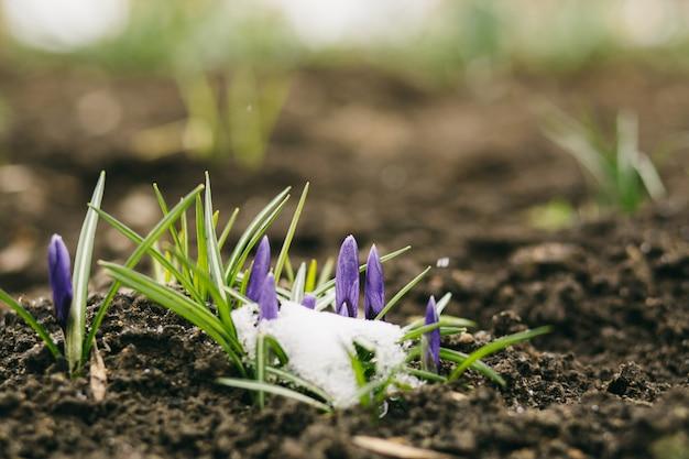 Fond de fleurs de printemps Photo Premium