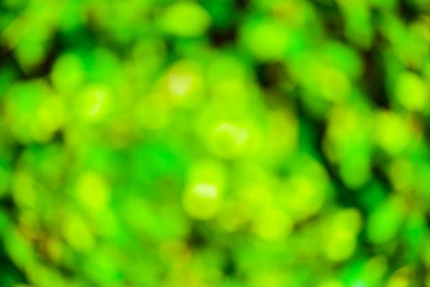 Fond flou vert et soleil Photo Premium