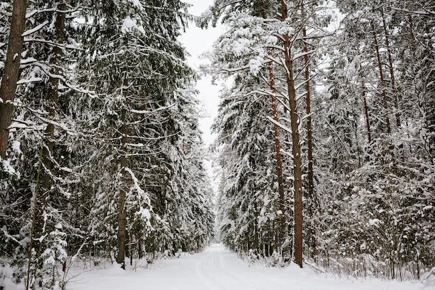 Fond de forêt d'hiver Photo Premium