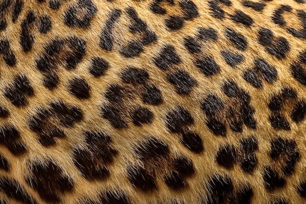 Fond de fourrure de léopard. Photo Premium
