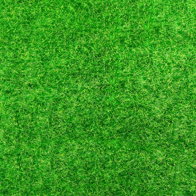 Fond d'herbe verte brillante Photo gratuit