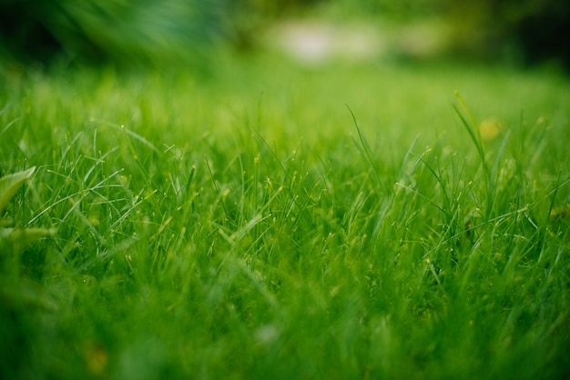 Fond d'une herbe verte. texture d'herbe verte Photo Premium