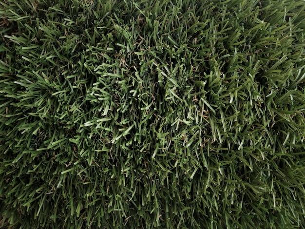 Fond d'herbe vu d'en haut Photo gratuit